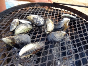 Mussels on the braai