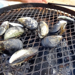Mussels on the braai