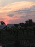 Sunset over the vines