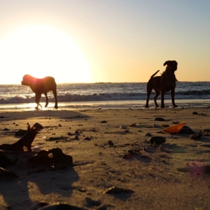 Sunset on the beach = playtime