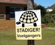 Danger! Tortoises