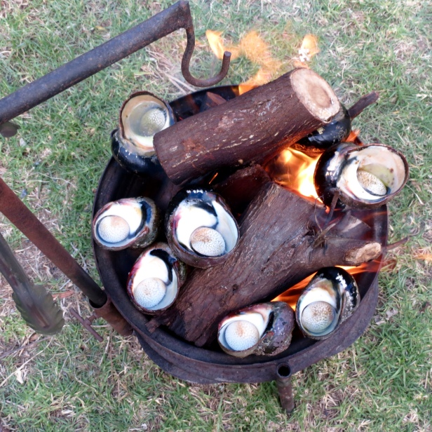 Cooking snails on the fire