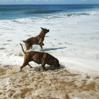 it's a dog's life on the beach