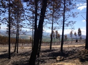 The devastating effects of one of the wildfires