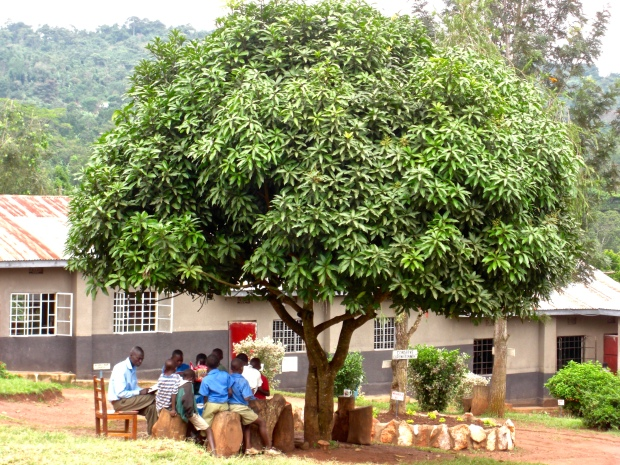 My 'Reading Tree' at school in Uganda